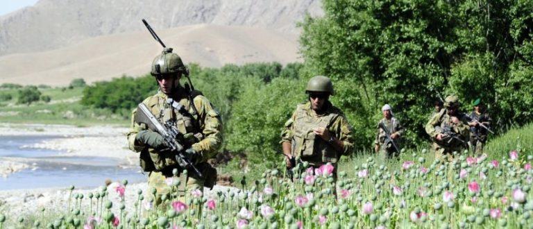 Article : La culture du pavot afghan repart à la hausse